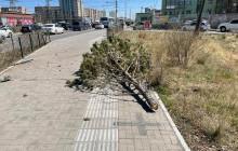 Согтуу жолооч замын хажуугийн хашлага болон нарс мод мөргөжээ