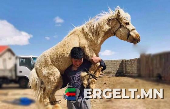 """Аймгийн хурц арслан """"Майга"""" Д.Суурийн зээ хүү М.БИЛГҮҮН: Би Монгол Улсын заан цолонд хүрэхийг мөрөөддөг"""