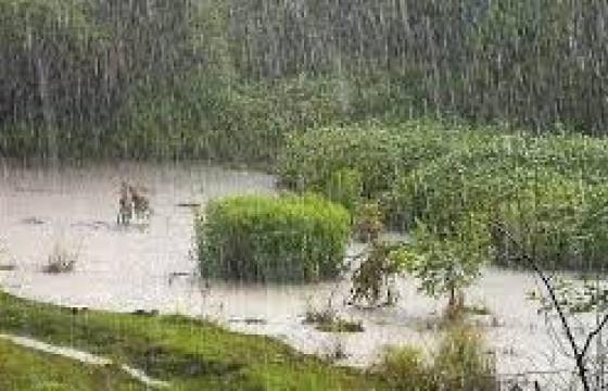 Ойрын өдрүүдэд нутгийн хойд хэсгээр бороо орж, өмнөд хэсгээр хална